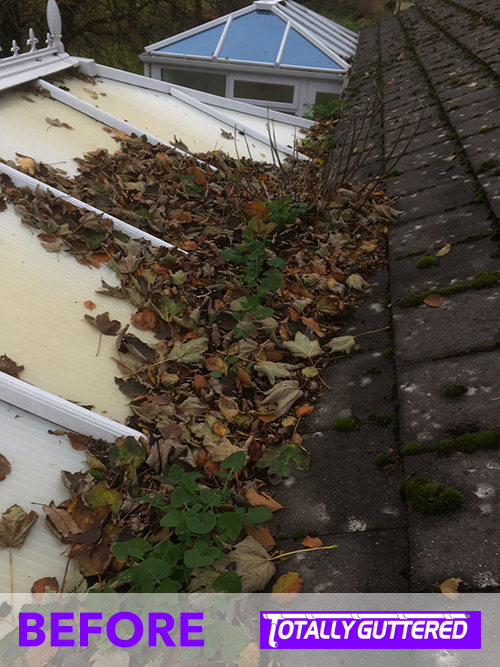 The tip of the iceberg - this was a particularly bad blocked gutter